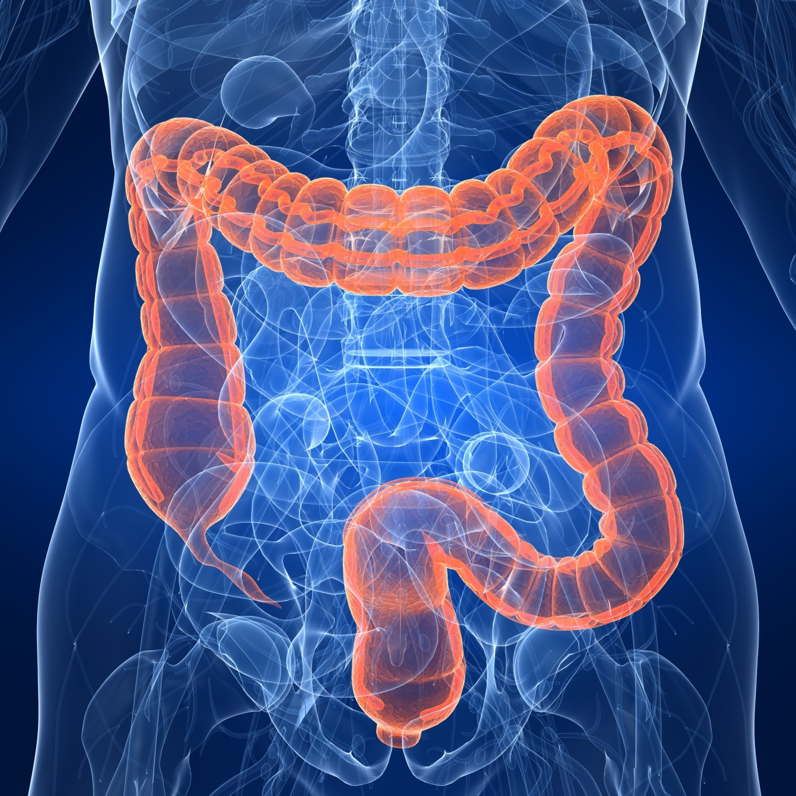 Can Glucosamine and Chondroitin Support a Healthy Colon?