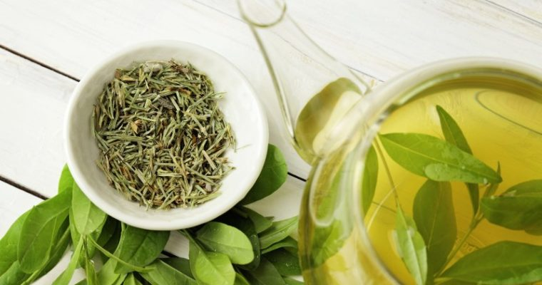 How Green Tea Provides Vital Immune Support